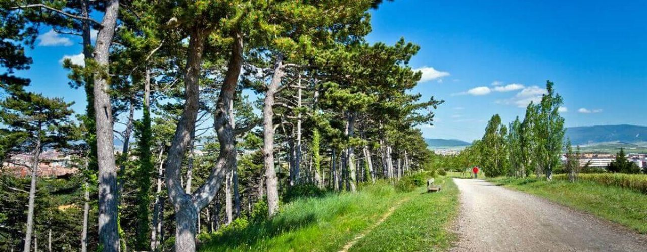 El pinar de ardoi paisaje 3